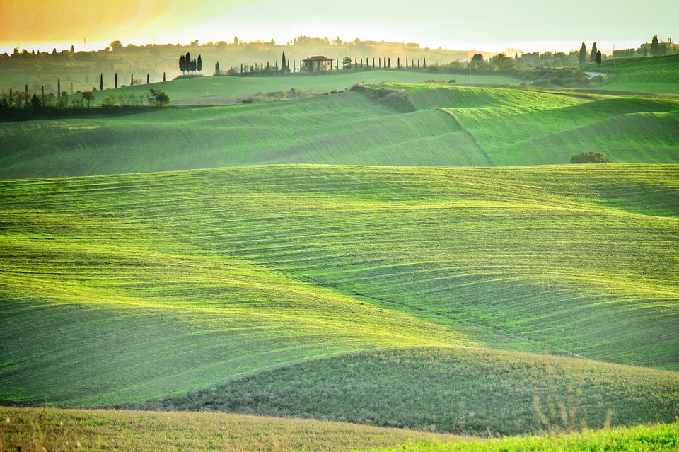 field, green, tuscany
