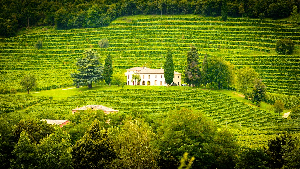 italy, winery, vines